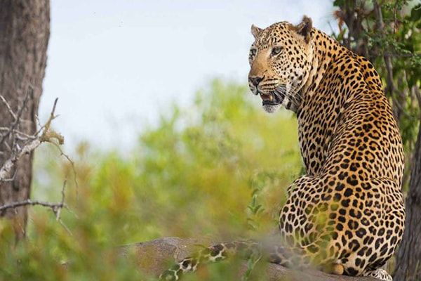 Pondoro Game Lodge Leopard