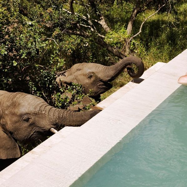 Royal Malewane Elephants