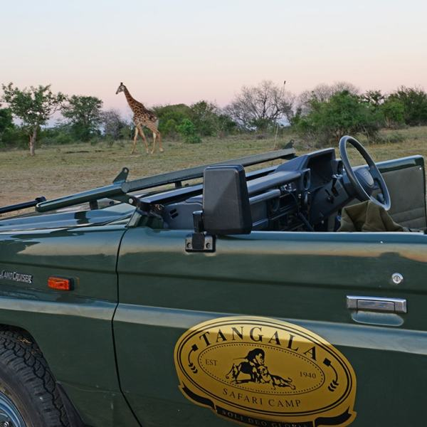 Tangala Safari Camp Game Drive Safari
