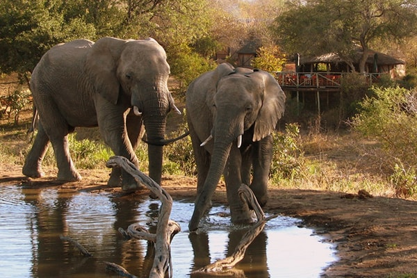 Umlani Bushcamp Elephants at the Camp