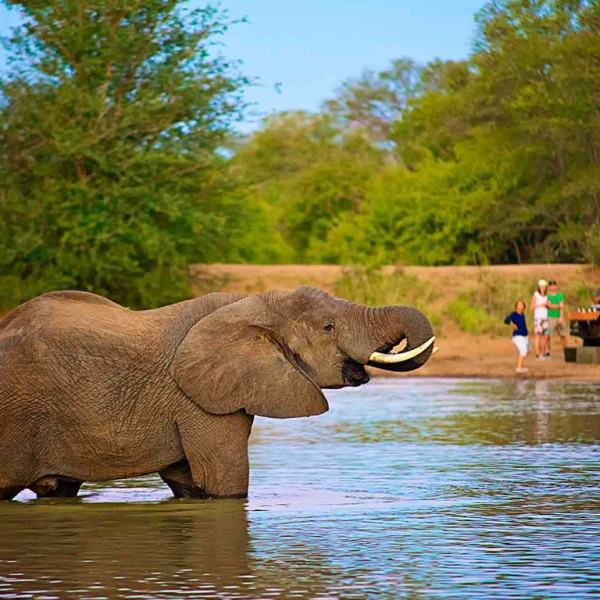 nThambo Tree Camp Elephant