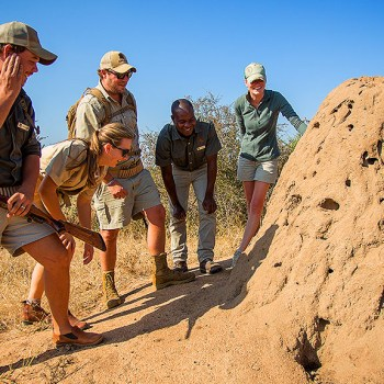 Bateleur Main Camp Ant Hill