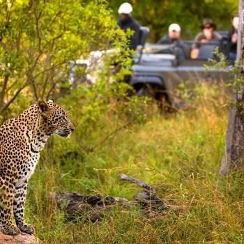 Kruger National Park Footer Section Image