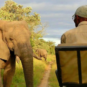 KwaMbili Game Lodge Game Drive Elephant