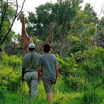 Manyatta Rock Camp Bush Walks