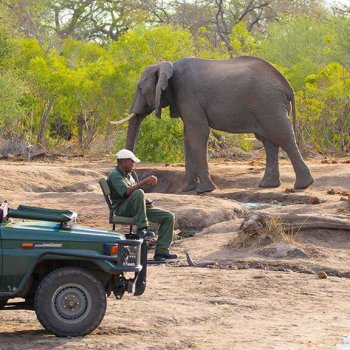 Nthambo Tree Camp Game Drive Elephant