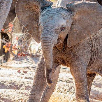 Shindzela Tented Safari Camp Elephants