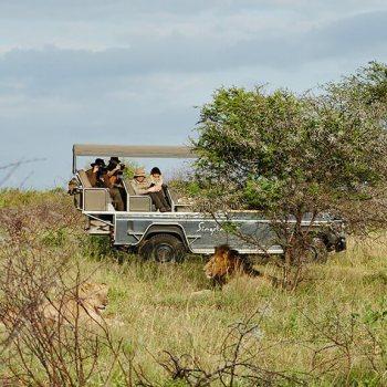 Singita Lebombo Lodge Lion