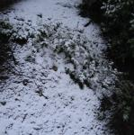 first snow in seattle