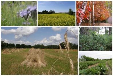 Przyroda z okolic Chotczy (fot. K. Furmanek)