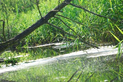 """Rezerwat """"Borowiec"""" - ostoja unikalnego żółwia błotnego (fot. A. Kucharski)"""