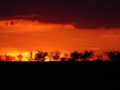 Rzeczniowskie sady o zachodzie słońca (fot. K.Lachowicz)