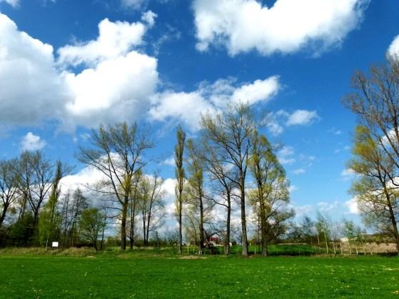 Łąki przy ul. Szkolnej w Siennie (fot. I. Piątek)