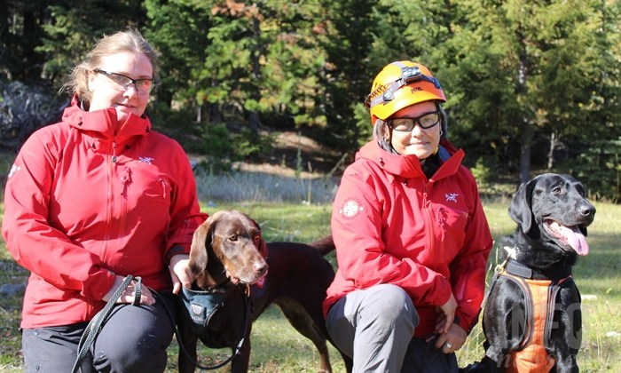 Behind the scenes look at helicopter dog training near Kamloops