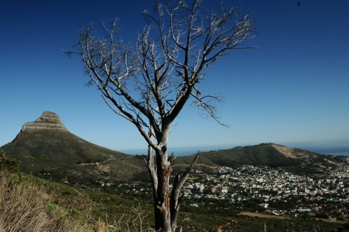 View of Lions Mountain from start of hike up Table Mountain