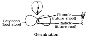 KSEEB SSLC Class 10 Science Solutions Chapter 8 How do Organisms Reproduce Ad Q 5