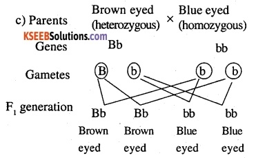 2nd PUC Biology Question Bank Chapter 5 Principles of Inheritance and Variation 13