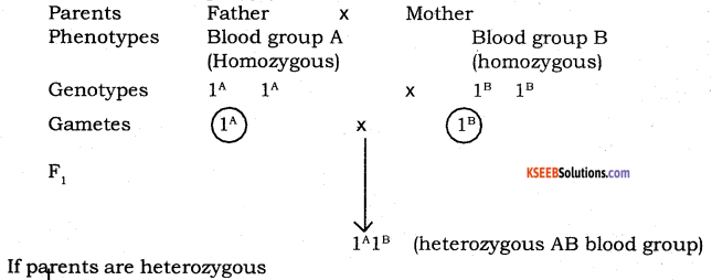 2nd PUC Biology Model Question Paper 4 with Answers 4