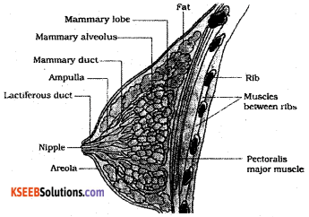 2nd PUC Biology Previous Year Question Paper june 2019 5