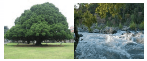 KSEEB Solutions for Class 4 English Chapter 3 Environment 16