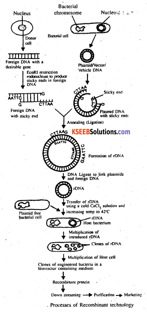 2nd PUC Biology Previous Year Question Paper June 2014 Q35(a)