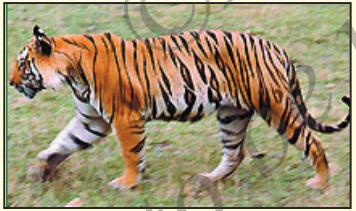KSEEB Solutions for Class 7 Hindi Chapter 6 हमारे राष्ट्रीय प्रतीक 5