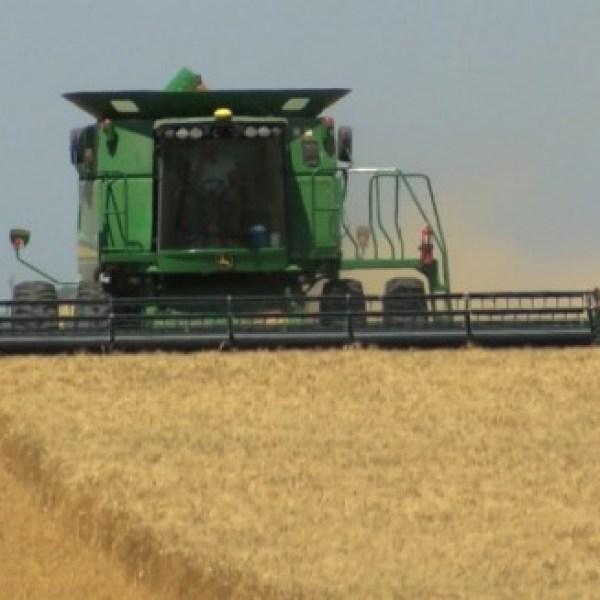 Kansas wheat harvest 3_195809