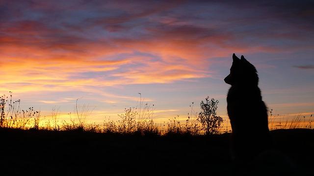 dog-1875252_640_380299
