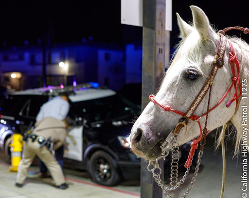 Drunken Man On Horseback_527472