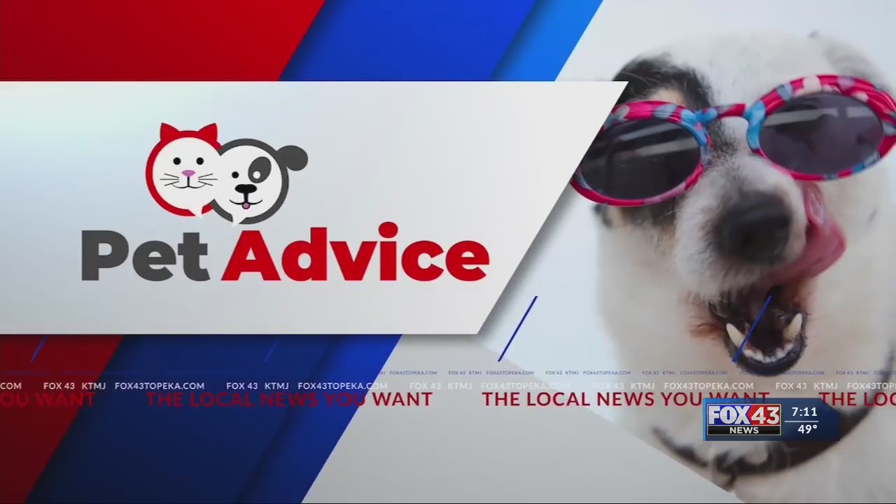 Pet Advice: Pet bird enrichment
