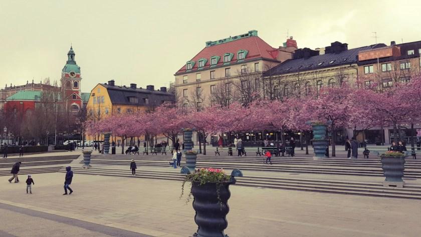 Cherry trees in Kungsträdgården