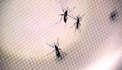 Mosquitoes-JPG_20160531181202-159532