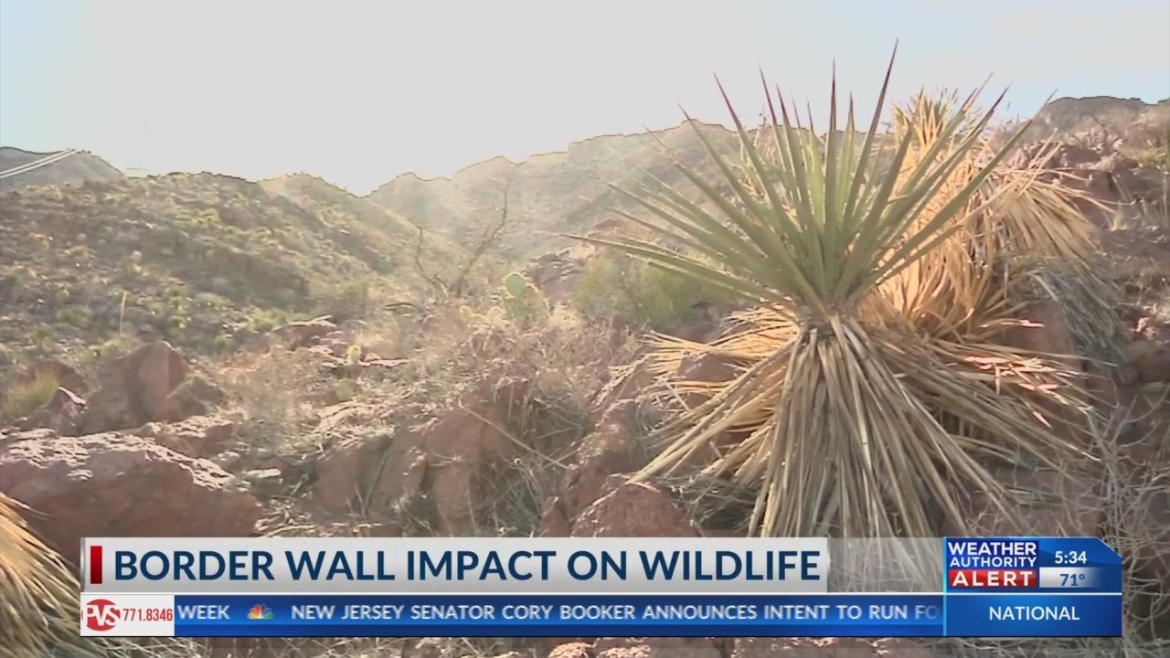 Wildlife experts say a border wall could impact animals
