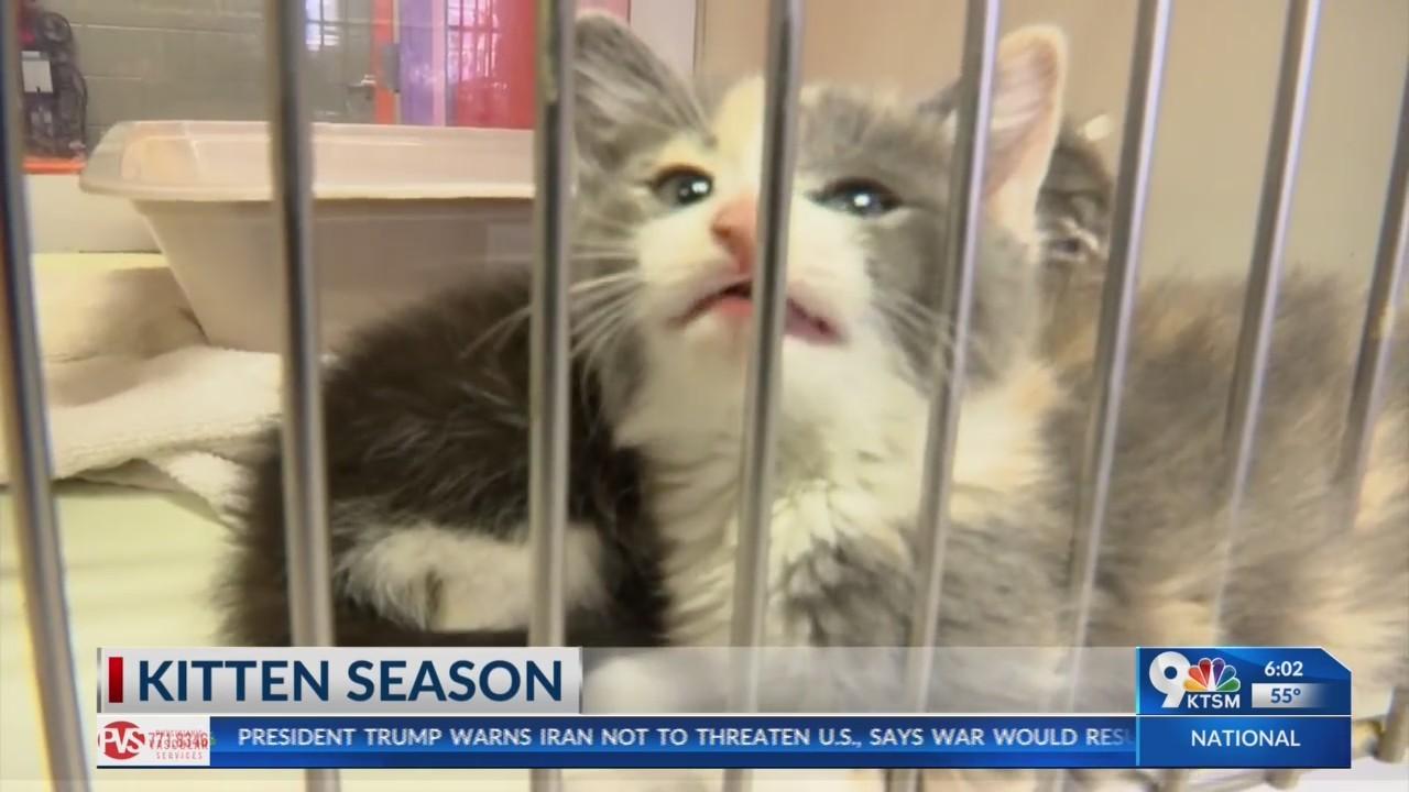 Kitten season in the Borderland causes overcrowding