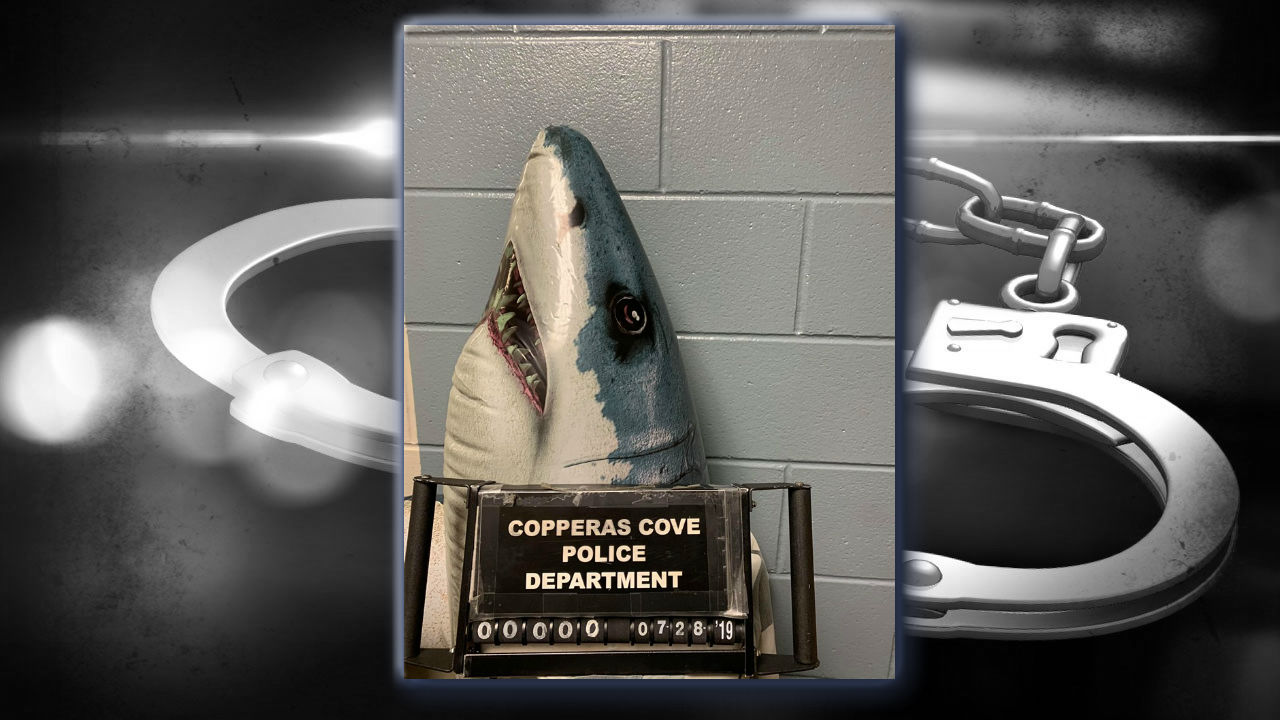 Texas shark busted for 'Possession of Seaweed'   KTSM 9 News
