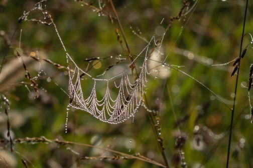 RBG collar web