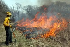 Prescribed Fire Workshop Burning