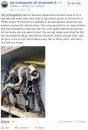 """A """"Shocking"""" discovery made by two workmen when they found two electrocuted snakes"""