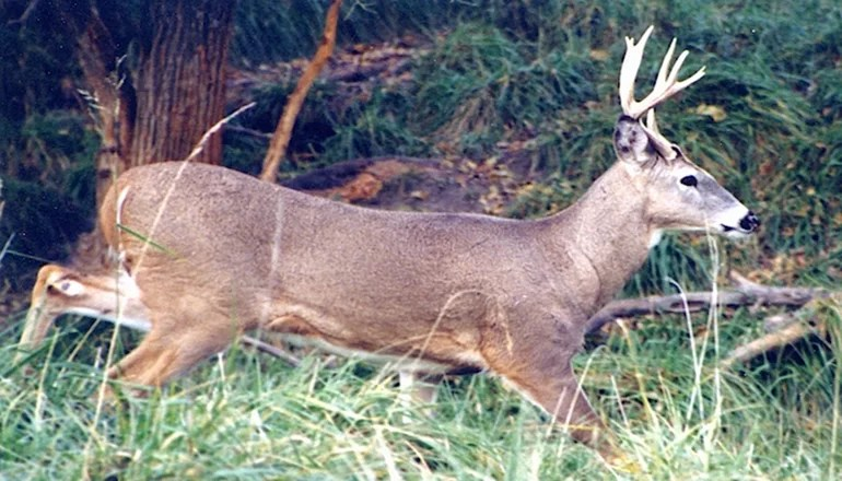 Department of Conservation reports November firearms deer harvest ends with 191,000+