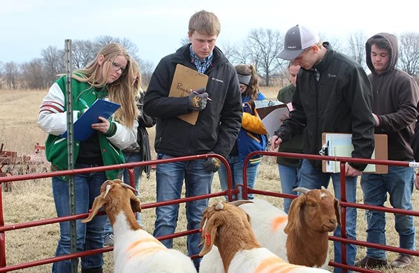 (L to R) Teresa Hannway from Mid Buchanan, Logan Krohn from Princeton, and Garrett Ransey from Cameron participate in livestock judging during NCMC's annual Ag Contest day.