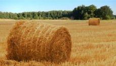Large bale of hay