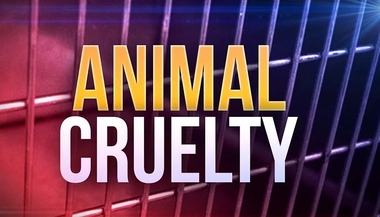 Investigation in Chula results in summons for animal abuse and neglect