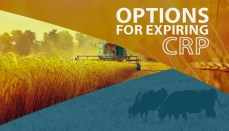 Options for expiring CRP