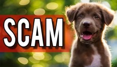 Pet Scam Graphic