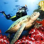Scuba Diving in Antalya