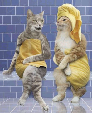Kucing-Kucing tukang gosip