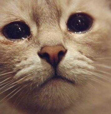 catcrying2 - Beranda
