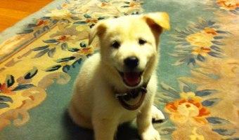 Kuddly Co-Founder's First Pet: Baek Hee