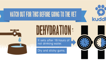 Pet Behaviors That Could Help You Save Their Lives