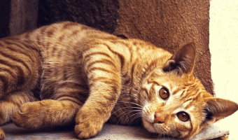 10 Signs You're A Pet Owner